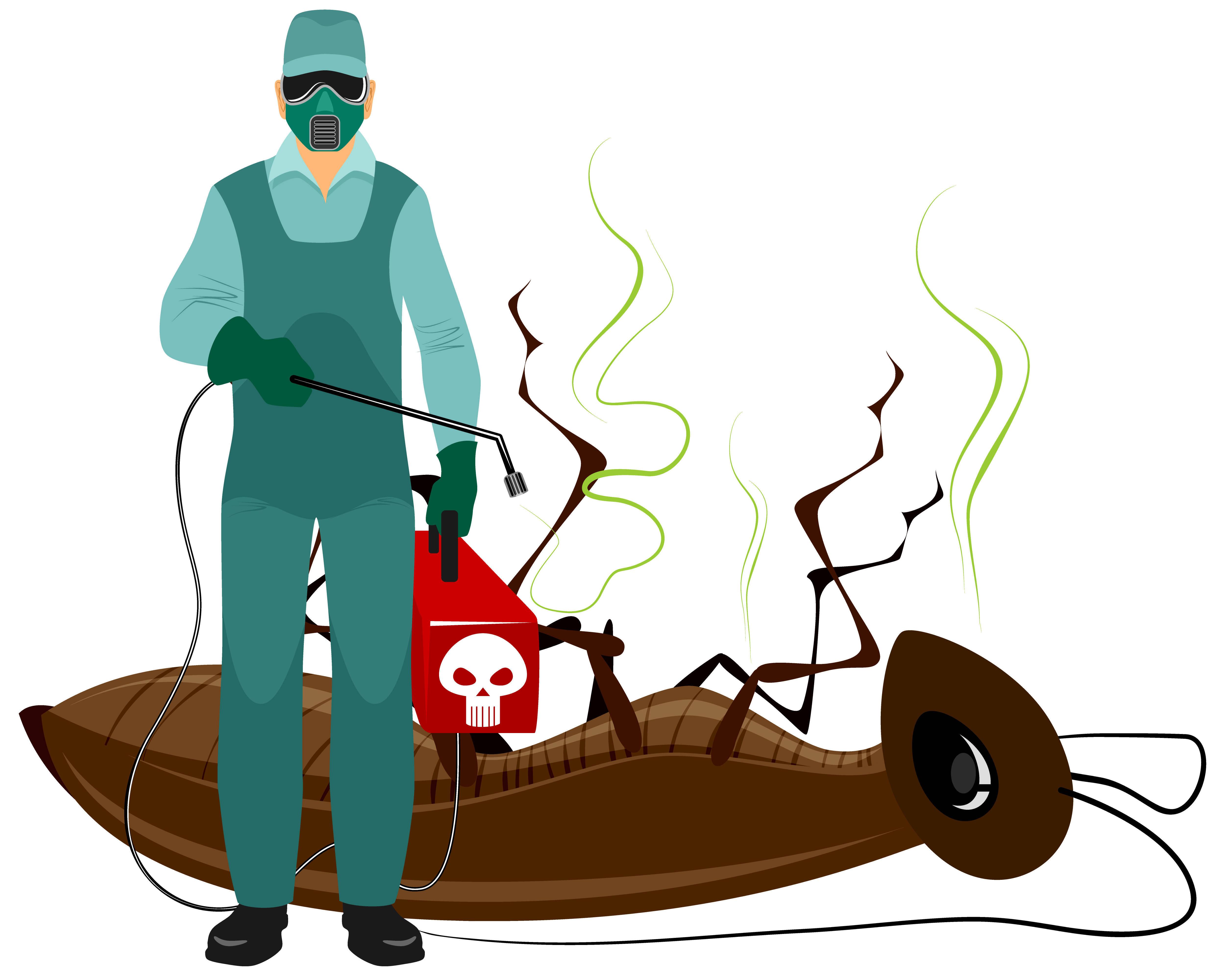 Cómo resolver un problema de Fumigación en nuestra Vivienda